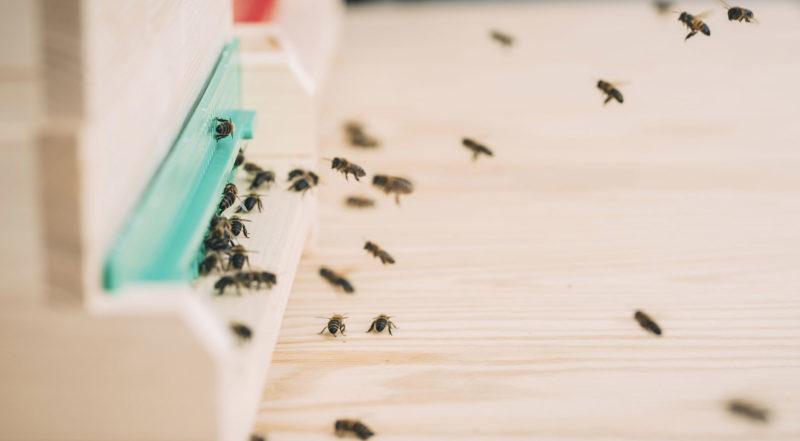 Führung und Honigverkostung